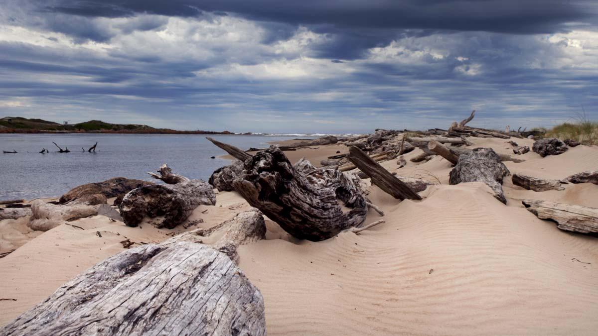 Arthur River Coastal Walk